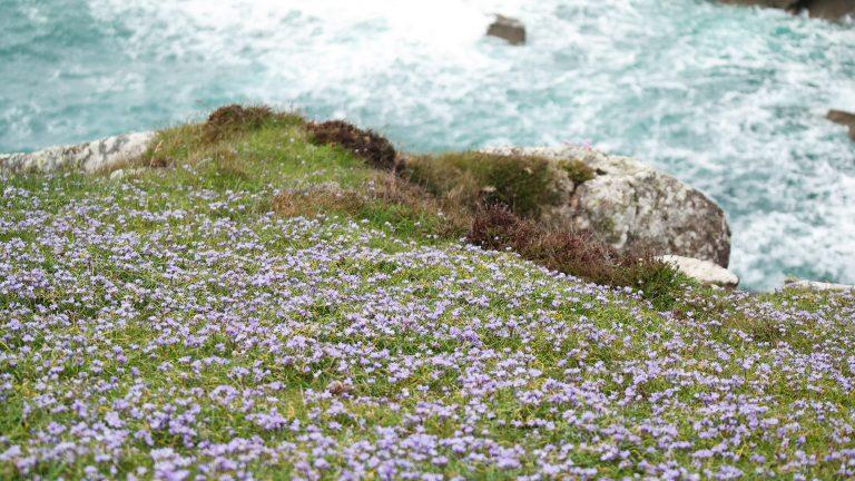 Wales – Pembrokeshire coast path
