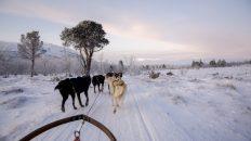Zweeds Lapland - Avonturen